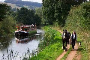 Taffy the Shire-Horse pulling the Barge along the Tiverton Canal